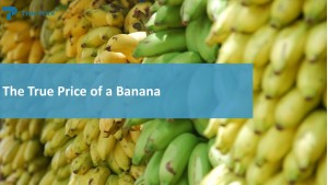 Fair Trade bananas2-6