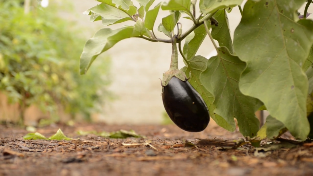 2015-05-05 14_05_54-A School District Unites Around Food on Vimeo_Ecotrust